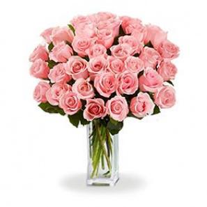 36 Long Stem Pink Roses buy at Florist