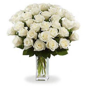 36 Long Stem White Roses buy at Florist