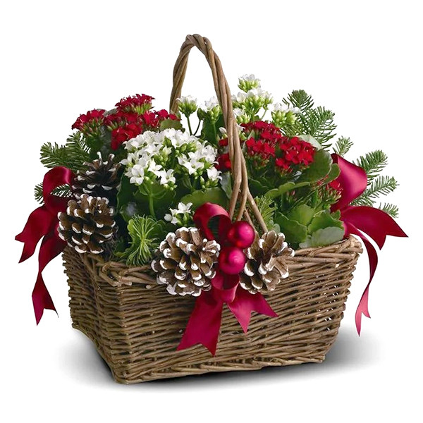 Joyeux Noel Planter Basket buy at Florist